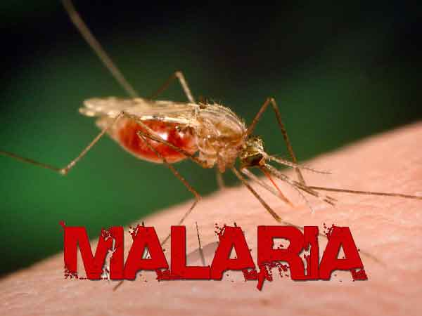 Malaria Vaccine Imminent -Researchers