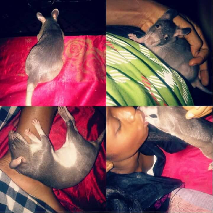 Nigerian lady mourns her two late giant pet rats [See Photos]