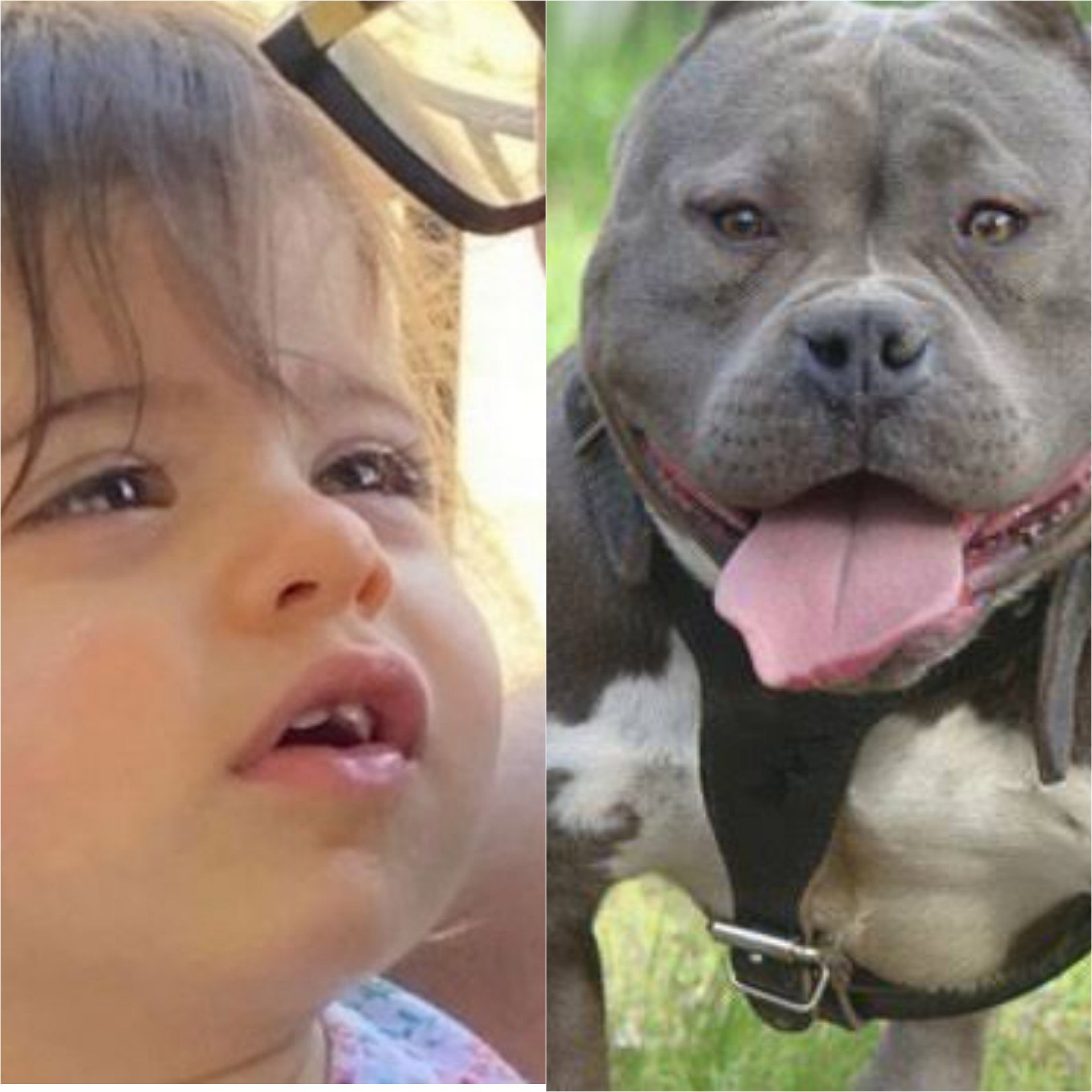 Toddler mauled to death by stray dogs in Chandigarh