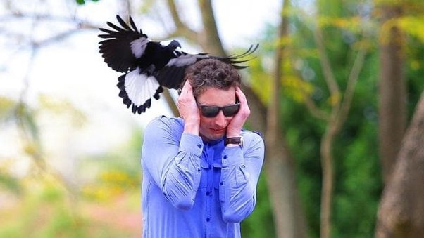 Salute The Magpie Or Have Bad Luck! See Why English people Talk To This Kind Of Bird