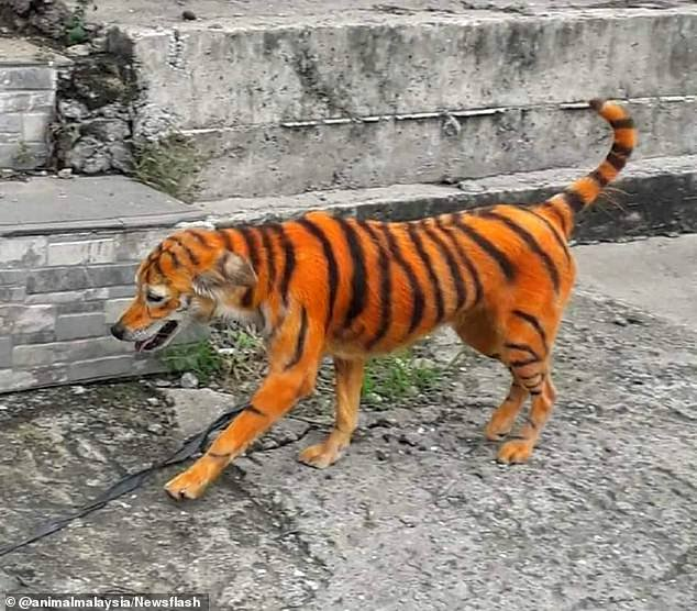 Man Lands In Hot Soup After Painting His Dog To Look Like Tiger (Photos)