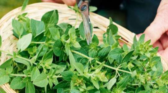 NATIVE POWER! These Herbs From Across Africa Are Proven To Heal All Sorts Of Ailments