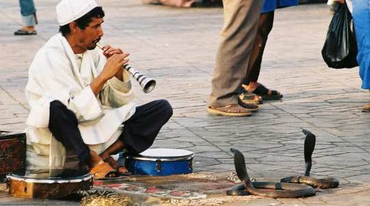 COBRA COMMANDERS! See The Secret Behind The Ancient Practice Of Snake Charming In India