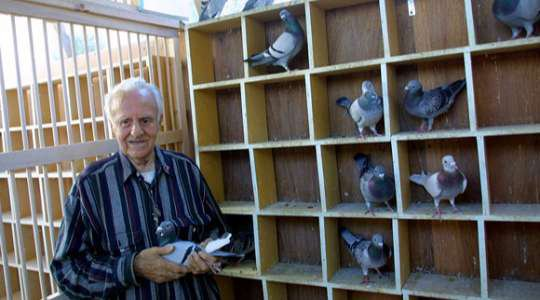 DEADLIEST RACE IN THE WORLD!! See Why The Pigeon Race Is The Deadliest Animal Race In The World!