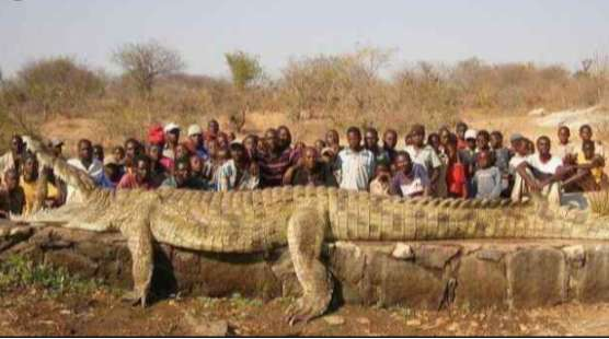 BLOOD AND TERROR: Meet 'Osama The Crocodile' Who Ate Over 80 Humans In Uganda