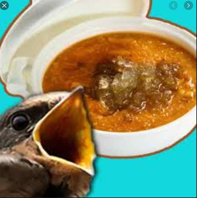SOUP MADE FROM BIRD NEST?? Read More To See This Strange Delicacy !