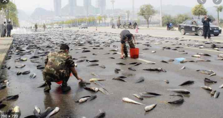 WAIT WHAT!! You Mean Fish Now Fall From the Sky?? Find Out More Here