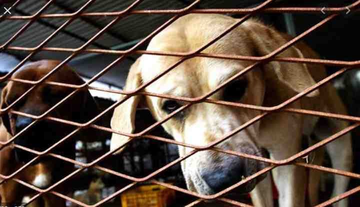 DISHEARTENING BUT SWEET! See The Delicious Meal Cooked With Dog Meat In This Part Of The World