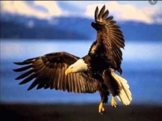 OMG! Are Eagles Really That Special?? Find Out How Eagles Are Revered In This Country !