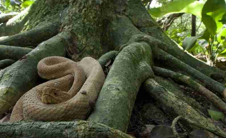 DANGER!!! Did You Know An Island Where Snakes Rules Not Humans   See Where This Place Is
