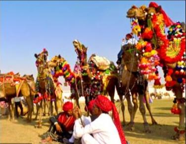 WOWW! See The Festival Where Camel Are Shaved For Five Days And Adorned