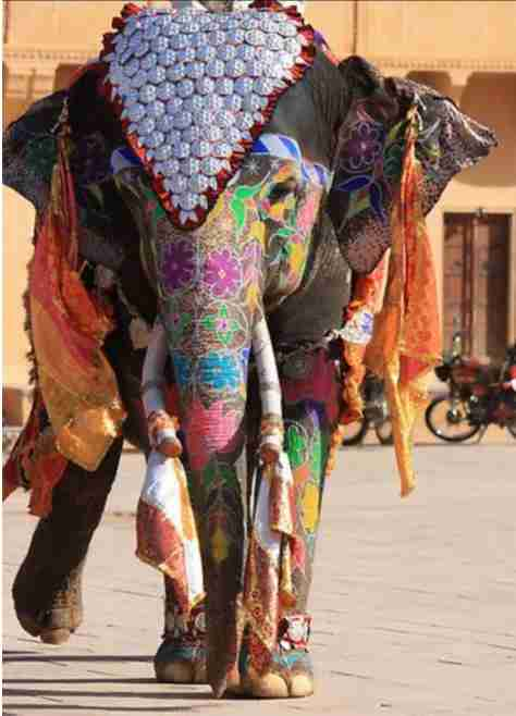 FOR REAL??? Did You Know That An Elephant Is A god In This Part Of World??? See For Yourself