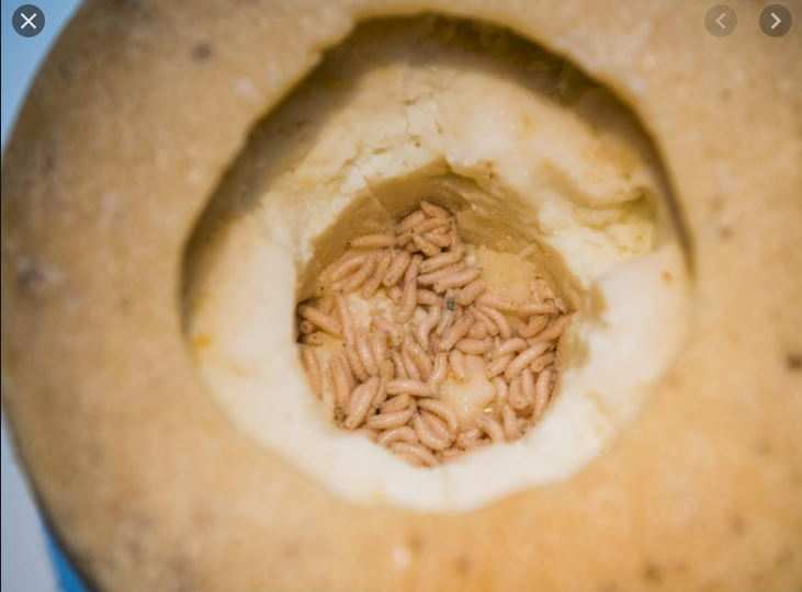 DON'T THROW UP!! Do You Know That People Eat Rotten Cheese With Live Maggots In It? See This