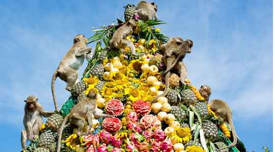 MONKEY BUFFET FESTIVAL | See Where Monkeys Are Treated To A Big Party Every Year