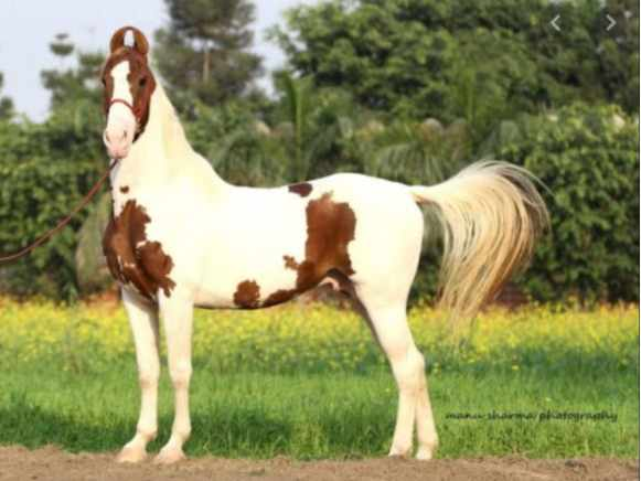 THIS COUNTRY'S BELIEFS ABOUT HORSES WILL SHOCK YOU! Read More Here