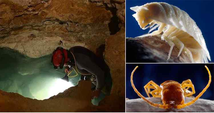 UNBELIEVABLE!!! Check Out Amazing Life Of The Poisonous Movile Cave