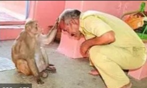 Why Do Indian Worship Monkeys? You Can Only Know If You read This – You will Shocked!