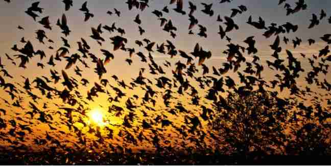 STRANGE: See The Most Unique Place In The World Where Birds Come And Commit Suicide