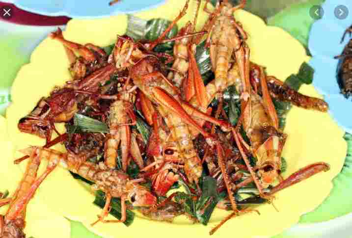 OH MY!!! Locust Dish Has Become A Much Wanted Snack In Isreal – See Why Here